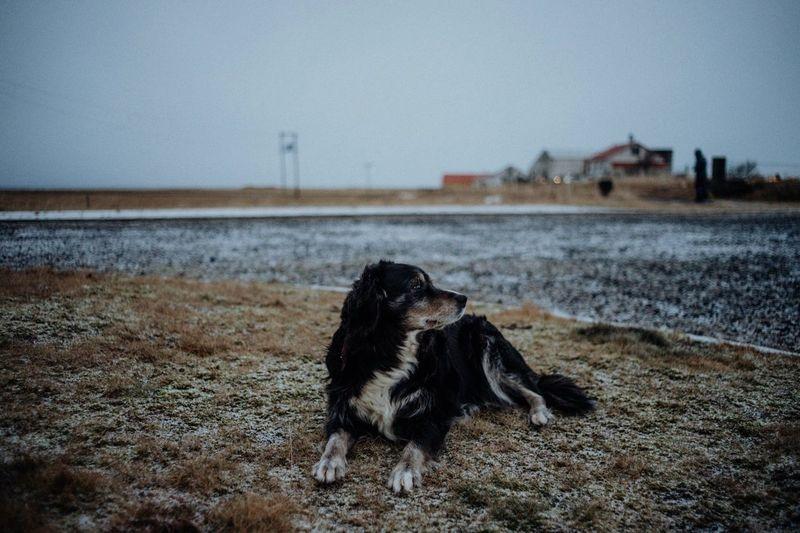 Dog by house against sky