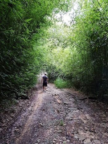 rainforest track Beauty In Nature Outdoors Day Australia Rainforest Australia Rainforest Road Growth Men Shadow Standing Grass Nature Only Men Adult Go Higher
