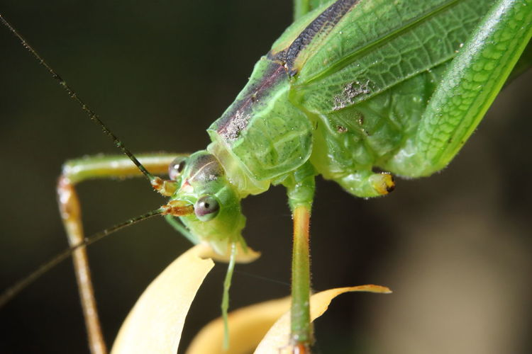 Grasshopper Insect Nature Animal Animal Body Part Animal Themes Animal Wildlife Animals In The Wild Close-up Day Focus On Foreground Grasshopper Green Color Growth Insect Invertebrate Leaf Mantis Nature No People One Animal Outdoors Plant Plant Part Selective Focus Sunlight