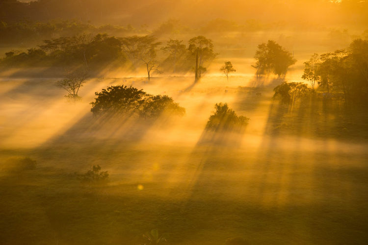 Beauty In Nature Nature Orange Color Outdoors Scenics Sun Sunset Tranquil Scene Tranquility Tree The Essence Of Summer - 2016 Eyem Awards Journey Sky Day Amazing View Amazing Nature Florest Tropical Climate Tropical Rainforest