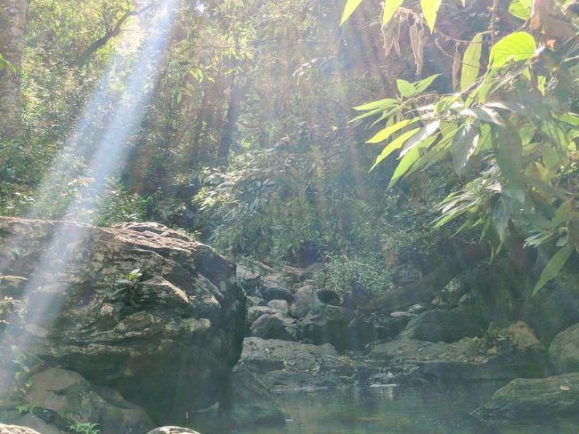 water in deep forest Growth UnderSea