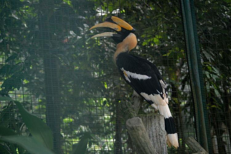 Hornbill at zoo