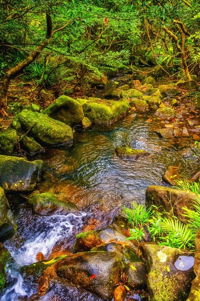 Full Frame Backgrounds No People Tree Growth Outdoors Beauty In Nature Water Tranquility Freshness Stream - Flowing Water EyeEm Best Shots Wilderness Detail Tranquil Scene EyeEm Nature Lover Getting Inspired My Unique Style Exceptional Photography Artistic Expression Hellow World Check This Out 😊 EyeEm Gallery Getting Creative Beauty In Nature Focus On Foreground