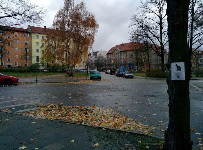 Autumn Cat Street