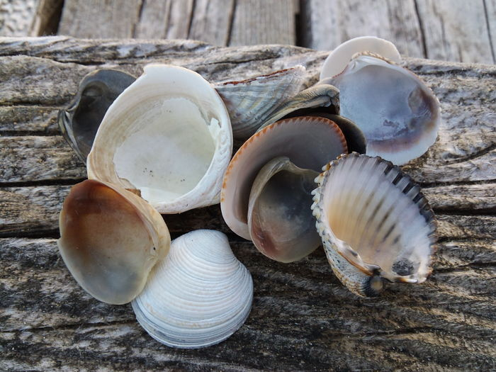 High Angle View Of Shells On Wood
