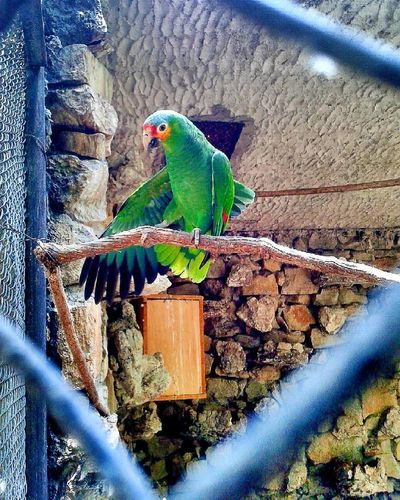 Animal Themes One Animal Animals In The Wild Parrot No People Bird Green Color Nature Animal Wildlife First Eyeem Photo EyeEmNewHere