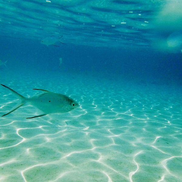 波照間 Haterumajima 沖縄 Sea 海 Beach Okinawa Japan Beautiful Blue Blue Sea 魚 Fish