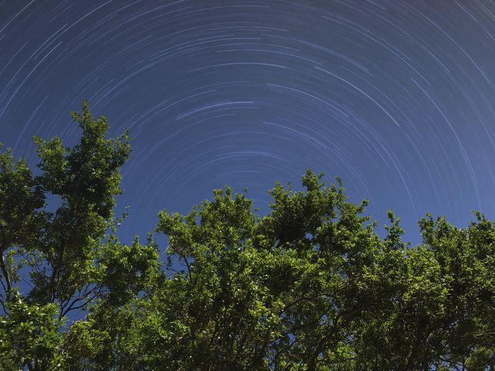 Tree Star -