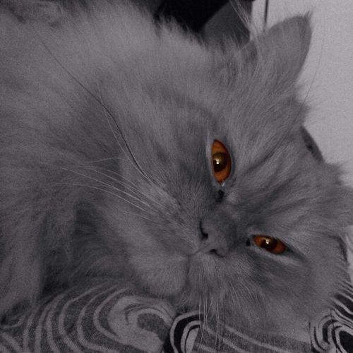 Those eyes... Rocky The Cat Cat My Cat
