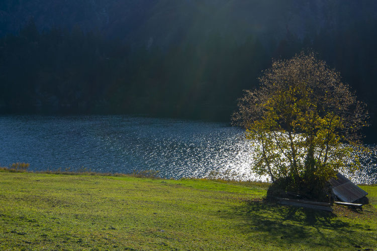 Mountain lake with sun Plant Water Grass Tranquility Tree Nature Tranquil Scene Scenics - Nature Beauty In Nature Land Lake No People Day Green Color Growth Non-urban Scene Sky Field Outdoors