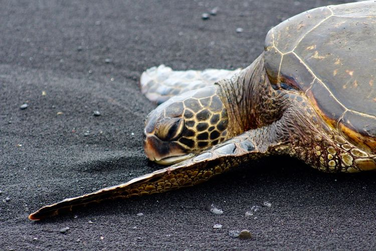 Close-Up Of Dead Tortoise On Shore At Beach