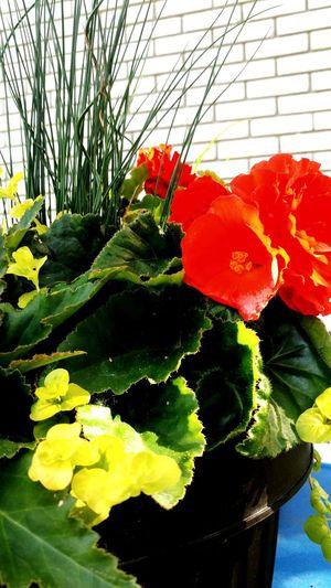 Flower Head Flower Greenhouse Leaf Petal Botany Close-up Plant Green Color