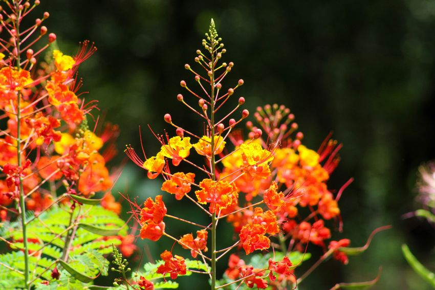Orange flower Flowers,Plants & Garden Flower Collection Flower Head Flower Plant Beauty In Nature Growth Focus On Foreground Close-up Flower Freshness Orange Color Outdoors Day Vulnerability  Nature No People Flowering Plant Tree Yellow Red Green Color Fragility Selective Focus