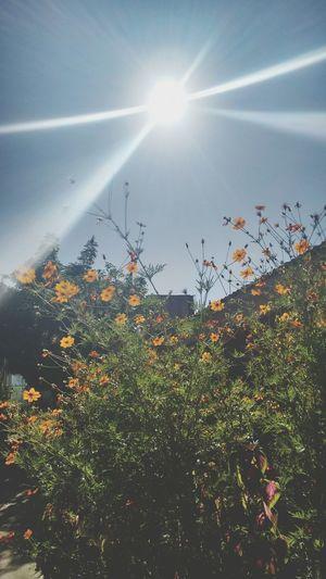 Flores 😍
