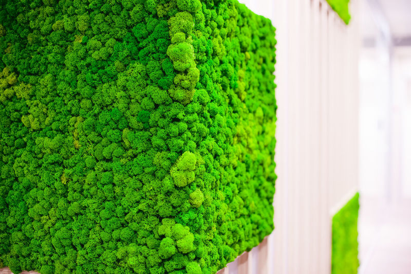Beauty In Nature Broccoli Close-up Day Directly Above Focus On Foreground Freshness Green Green Color Growth Healthy Eating Hedge Indoors  Leaf Nature No People Pattern Plant Plant Part Vegetable