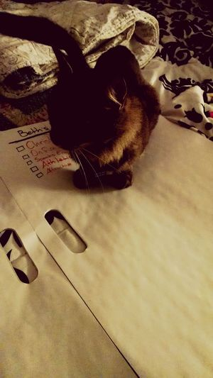 The helpful project cat