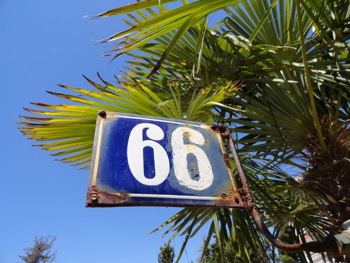 Low angle view of signboard against palm tree and clear blue sky