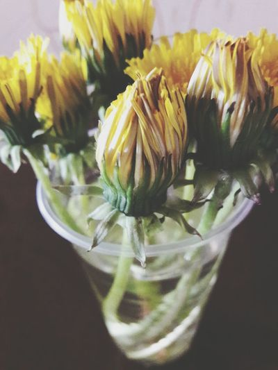 Indoors  Freshness Close-up Flower Fragility Day Flower Head Blooming Photos LearningPhotography PicturePerfect PicFeeling ArtWork Photographers On EyeEm Pics Eyeemmarket Uncultivated Growth Springtime Plant Beauty In Nature Freshness Blossom Nature Petal Live For The Story BYOPaper! The Street Photographer - 2017 EyeEm Awards The Great Outdoors - 2017 EyeEm Awards The Photojournalist - 2017 EyeEm Awards EyeEmNewHere