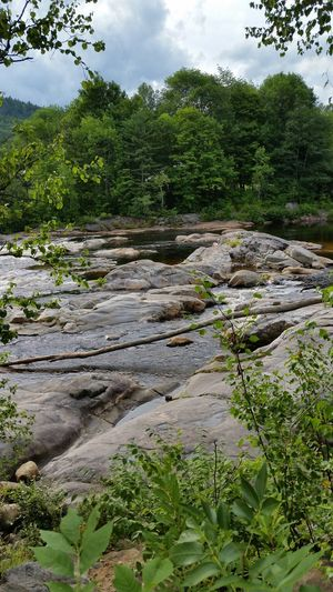 Tree Nature Growth Green Color Water Outdoors No People Beauty In Nature Landscape Granite White Mountain National Forest NH New Hampshire, USA New Hampshire Woodstock, NH River The Pemi Pemigewasset River Summer