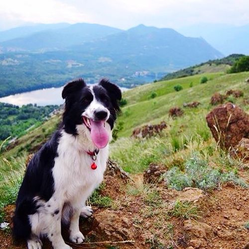 Sempre in movimento🏃🏻 Igersdogs Walking Around Trekking Dog❤ I Love My Dog Bordercollie  Piemonte Nature Photography