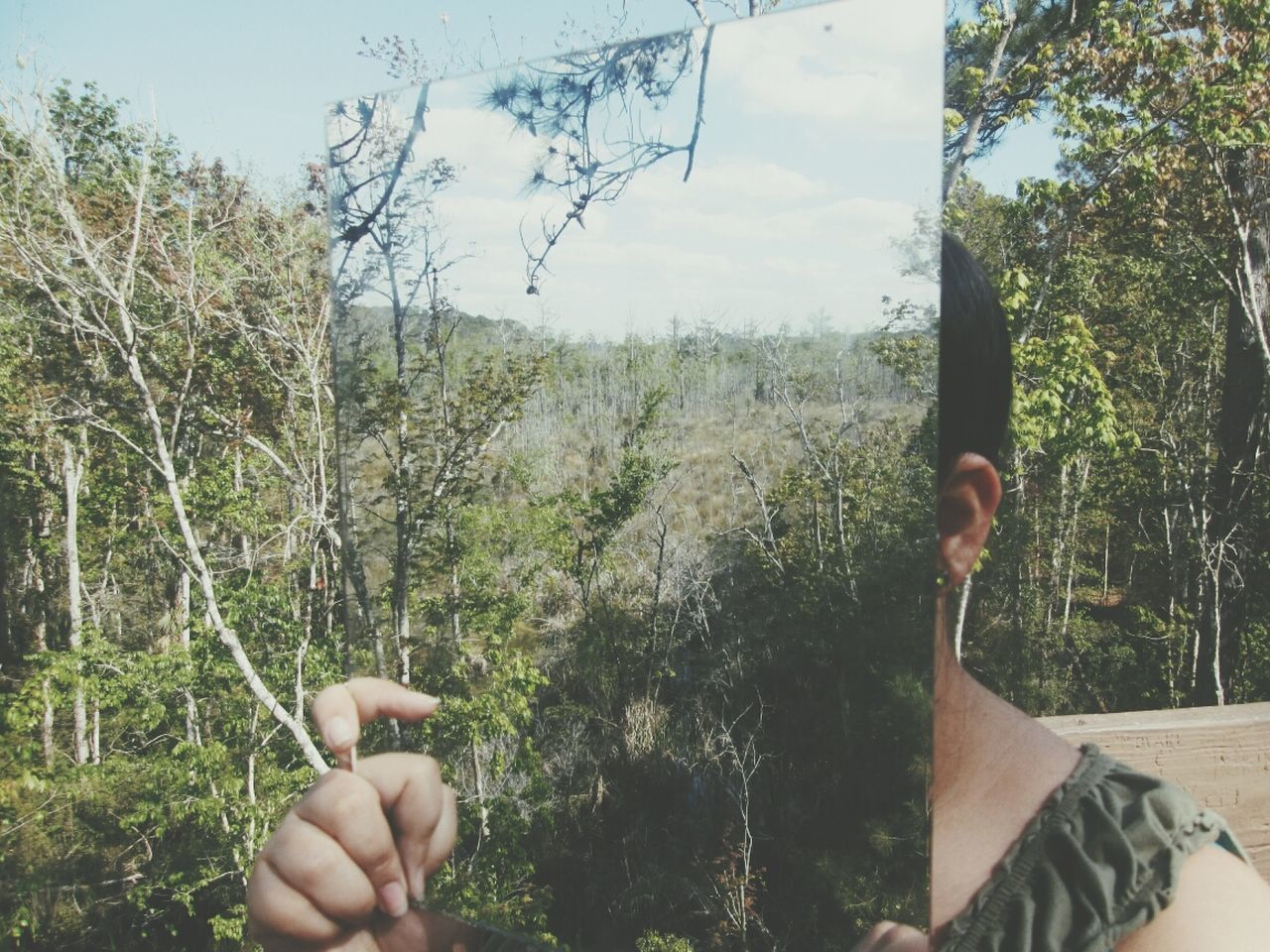 human hand, tree, human body part, real people, human finger, one person, gesturing, holding, day, nature, outdoors, forest, men, sky, beauty in nature, close-up, people