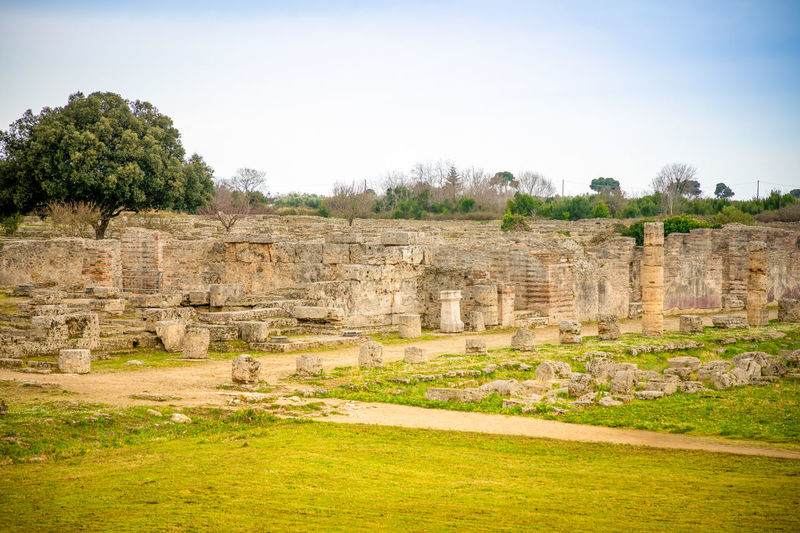 Italy Paestum History The Past Architecture Ancient Plant Built Structure Tree Sky Old Ruin Nature Ancient Civilization No People Grass Travel Destinations Day Old Travel Tourism Archaeology Outdoors Architectural Column Ruined