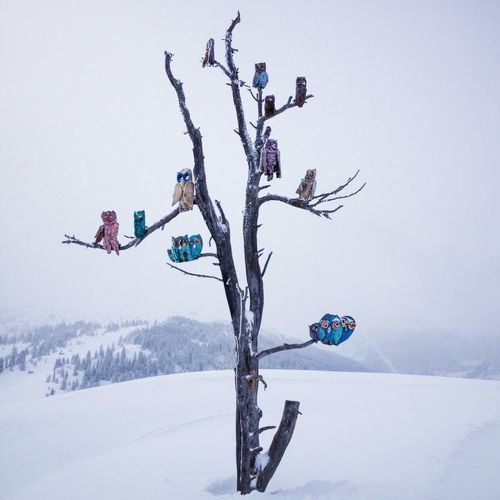 Owls Mobilephotography IPhoneography Altabadia Dolomites, Italy Iphoneonly IPS2015Trees Corvara