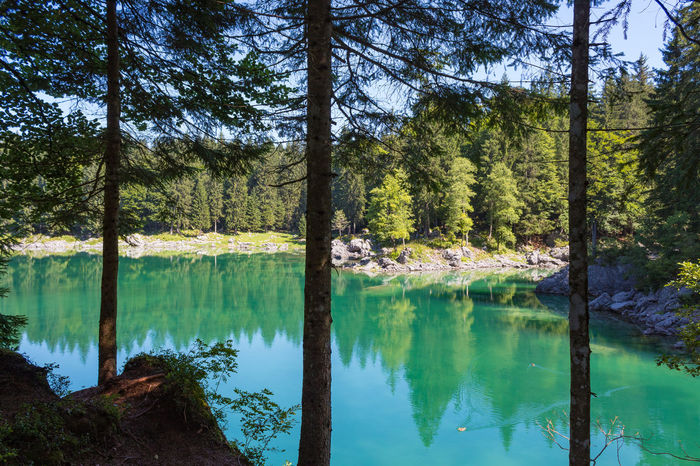 Friuli Venezia Giulia Reflection Beauty In Nature Day Emerald Forest Italy Lake Mountain Nature No People Outdoors Pinaceae Pine Tree Reflection Scenics Sky Tranquil Scene Tranquility Tree Tree Trunk Water