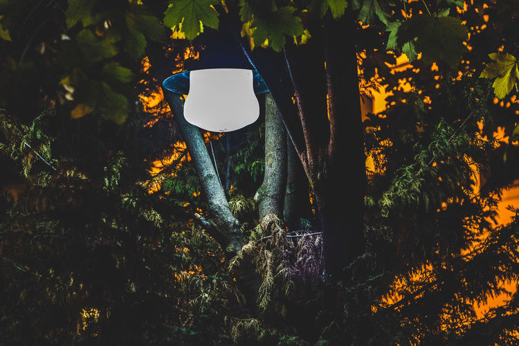 Illuminated Pendant Light Hanging By Trees At Night