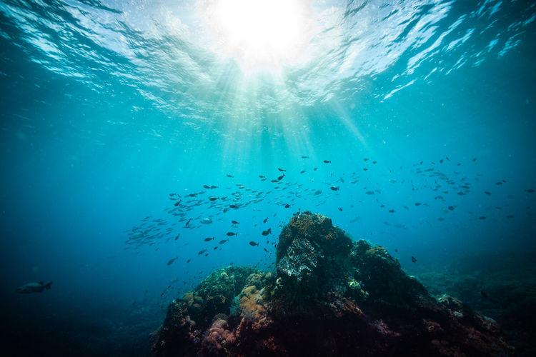 View of jellyfish swimming underwater