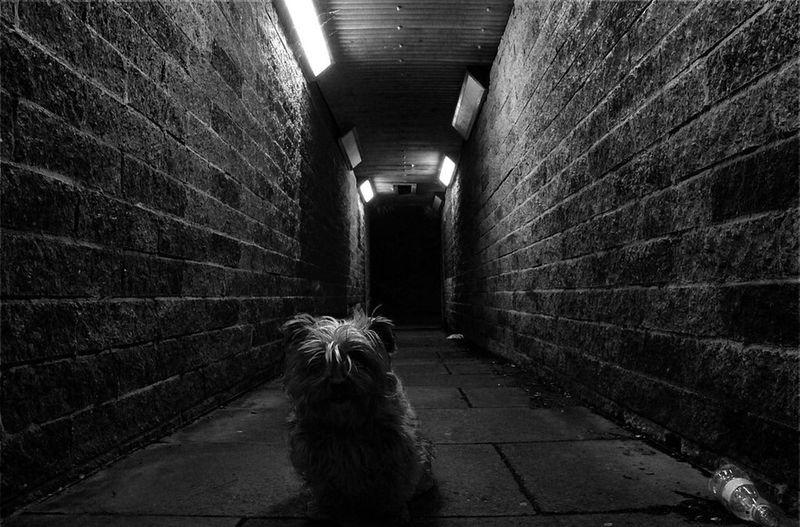 Perfect model Dog Puppy Shoot Trainstation Canon Underground