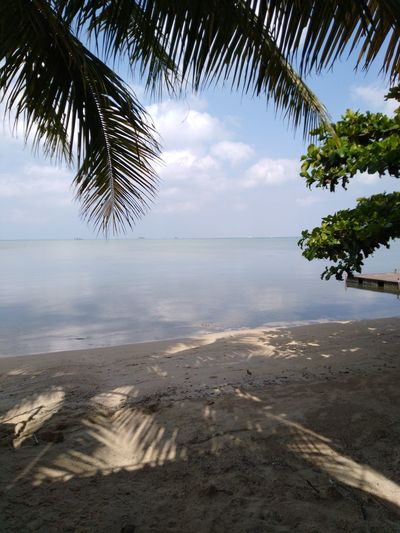 Hin Kong Phangan Island Tree Water Palm Tree Sea Beach Sand Blue Tropical Climate Sky Horizon Over Water