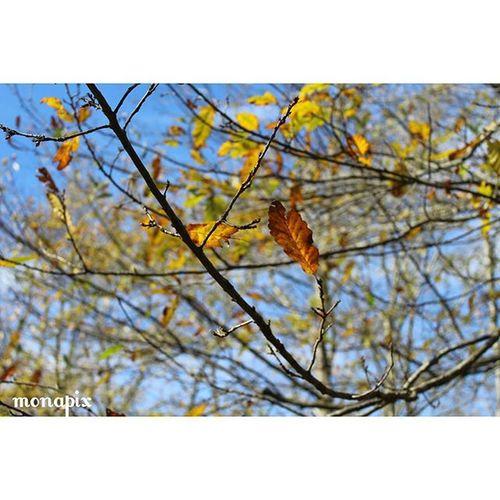 ا تلخ است که لبریز حقایق شده است زرد است که با باد موافق شده است عاشق نشدی وگرنه می فهمیدی پاییز ،بهاری ست که عاشق شده است زندگی پاییز برگ عاشق بهار زیبایی درخت عکاسی شعر Life Like Love Fall Spring Beauty Tree Poem Photography Mazarchehrii Monapix Monapix