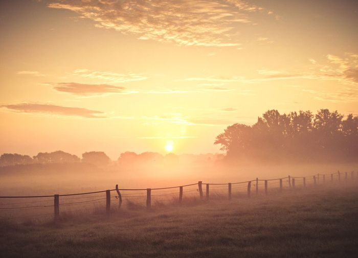 Morning fog Foggy Morning Fog Foggy Morning Hello World Landscape_Collection Landscape Landschaft Landscape_photography Landscape_photography Lower Saxony Sunlight And Shadow Landscapes With WhiteWall Scenics Glowing Tranquil Scene Sunlight Great Outdoors Fine Art Photography
