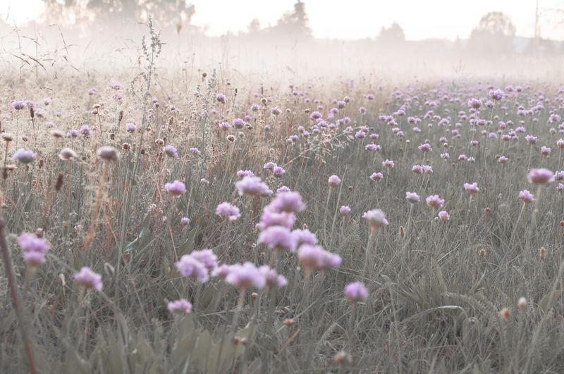 Clover flowers growing on grassy field