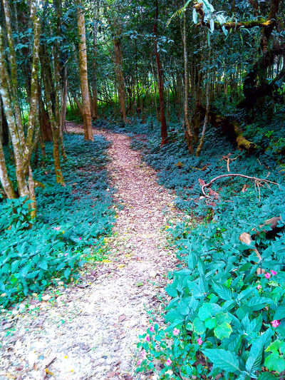 Biking Trail @ASEAN Heritage Park-- Cinchona, Bukidnon Beauty In Nature Biking Trail Day Grass Green Color Nature Outdoors Plant Tranquil Scene Tranquility Tree