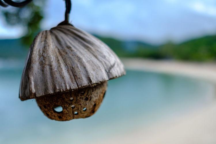 Coconut lantern