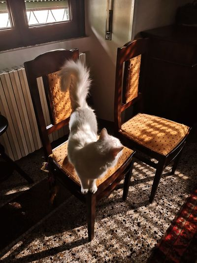Cat relaxing on chair at home