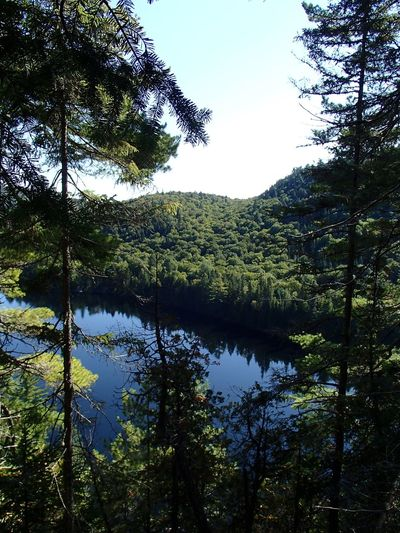 Lac Wapizagonke (Parc national de la Mauricie) Tree Plant Sky Growth Water Tranquility Beauty In Nature Scenics - Nature Lake Outdoors Clear Sky Coniferous Tree