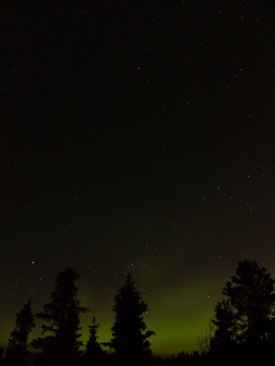 starry sky above green aurora blaze Aurora Aurora Borealis Aurora Polaris Beauty In Nature Canada Cold Temperature Dark Galaxy Low Angle View Nature Night Nightphotography No People Outdoors Scenics Silhouette Silhouette Sky Star - Space Tranquil Scene Tranquility Wilderness Winter