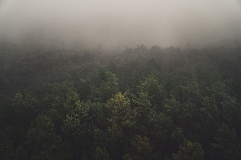 Moody Nature Moody Weather Forest Photography Drone Photography Misty Landscape Misty Morning Mist Tree Growth Beauty In Nature Plant Tranquility Fog Scenics - Nature No People Tranquil Scene Nature Green Color Environment Forest Land Non-urban Scene Day Outdoors WoodLand Landscape Idyllic
