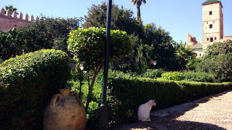 View of cat amidst plants against sky