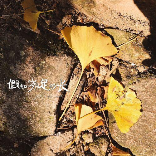 Leaf Change Dry