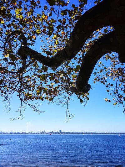 Perth Tree