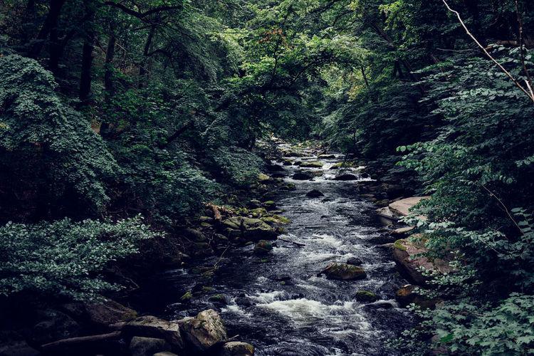 Bodetal Harz