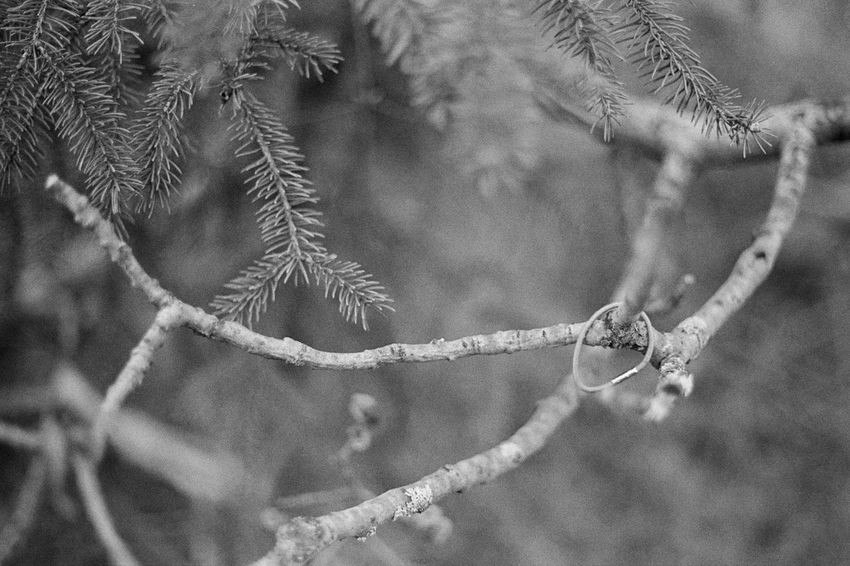 Full Frame Close-up No People Day Nature 35mm Film Analogue Photography Black & White Black And White Blackandwhite Blackandwhite Photography Caffenol Canon AE-1 Film Beauty In Nature Cold Temperature Outdoors Nature Tree Bare Tree Branch Forest Forest Photography