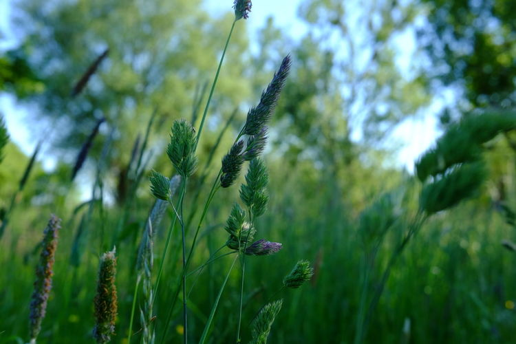 Beauty In Nature Close-up Day Green Color Growth Nature No People Outdoors Plant Tranquility