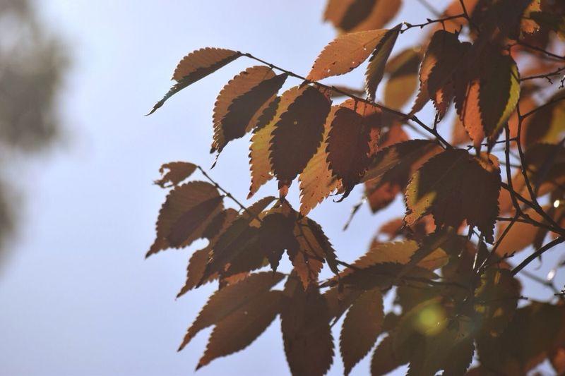 秋の写真てなんか好き。寂しげで切ないけど、なぜか心が温まる。落ち着く。 秋 枯葉 Japan