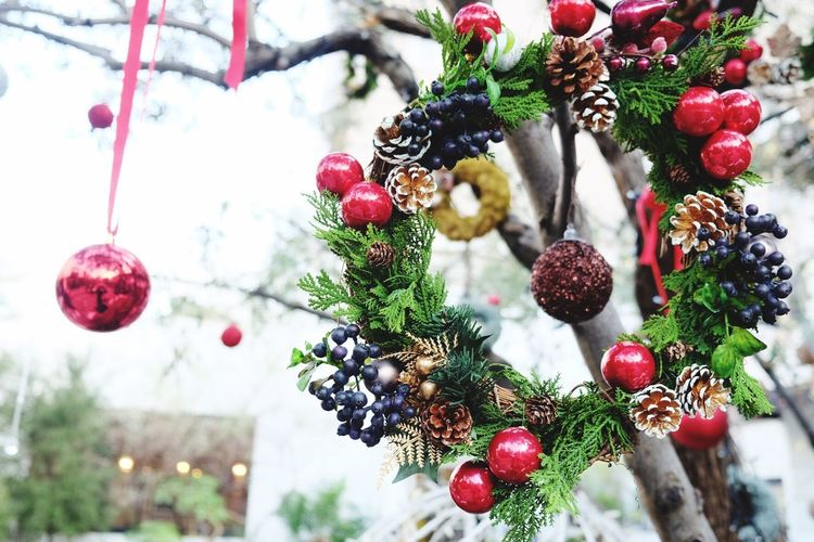 Xmas garden Fruit Hanging Tree Close-up Food And Drink No People Xmas Decorations Christmas Decorations Pine Cone Outdoors Growth Freshness Food Day Nature Wreath Wreaths Holiday Winter Holidays Handmade For You