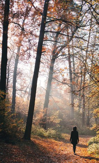 Rear view of man walking in forest during autumn